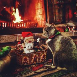 by Julie Dabour - Animals - Cats Portraits