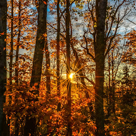 First sunrise by IMade Budaryawan - Landscapes Forests ( national park, fall, trees, forest, golden color, sunrise )