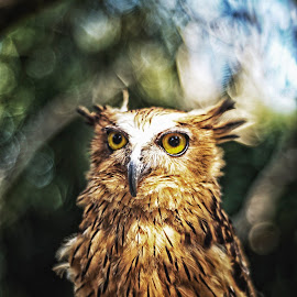 It's not hedwig by Indrawan Ekomurtomo - Animals Birds