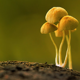 by Sirajuddin Halim - Nature Up Close Mushrooms & Fungi