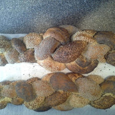 Seeded Braided Bread