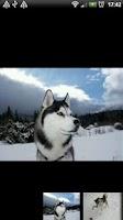 Screenshot of Hundar i Världen: Fakta&Bilder