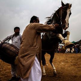 by Waqas Zia - Animals Horses
