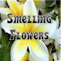 Smelling Flowers icon