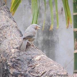 The Bird by Soumyadeep Das - Abstract Patterns ( abstract, bird, tree, nature, garden pics )