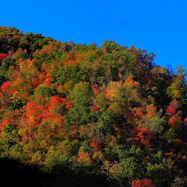 Fall in Leslie County Kentucky by Paul Mays - Landscapes Mountains & Hills (  )