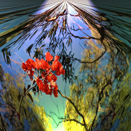 Bouganvillea by Feona Green-Puttock - Digital Art Abstract ( creative, art, image, enhanced, digital )