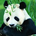 Panda Puzzle icon