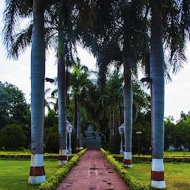 Saheliyon ki Baadi by Havneet Singh - City,  Street & Park  City Parks ( nature, udaipur, trees, landscape, garden )