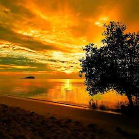 Golden Sunset @Belitung by Sigit Setiawan - Landscapes Sunsets & Sunrises ( sandy beach, tree, indonesia, tanjung pendam, sunset, golden sky, beach, belitung, golden sunset )