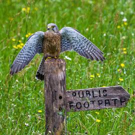 by Nigel Atkins - Animals Birds
