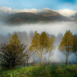 Lanscape by Ovidiu Marinoiu - Landscapes Mountains & Hills ( hills, tree, fog, trees )