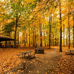 Burchfield park by Rajeev Krishnan - City,  Street & Park  City Parks ( park scene, fall leaves, park benches, park, fall colors, nature trail, , path, nature, landscape, relax, tranquil, relaxing, tranquility )