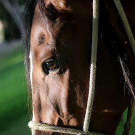 by Ivo Tunchel - Animals Horses