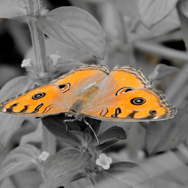 Am Yellow by Yusop Sulaiman - Animals Insects & Spiders ( selective color, pwc )