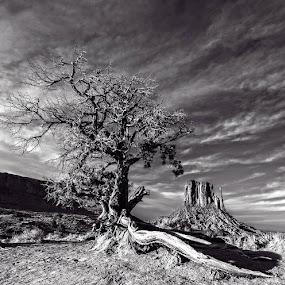 by Flavio Mini - Landscapes Deserts (  )