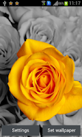 Screenshot of Spring Flowers