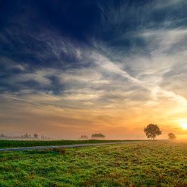 untitled by Zsolt Zsigmond - Landscapes Sunsets & Sunrises ( clouds, sky, tree, fog, sunrise, mist )