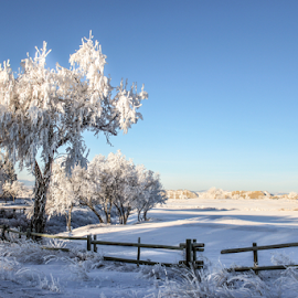 White Wyoming 2 by Stacey Cannon - Landscapes Prairies, Meadows & Fields ( winter, cold, meado, snow, wyoming, frost, trees, hoarfrost )