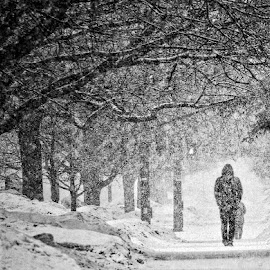 Snow storm by Debasmit Banerjee - News & Events Weather & Storms