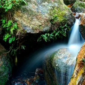 Munnar Kerala Water Fall  by Vyom Saxena - Nature Up Close Water ( water serene, water speed, water fall kerala, water fall, lowshutter speed water )