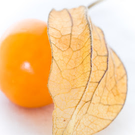 What's a physalis? by Andy Boyce - Food & Drink Fruits & Vegetables ( orange, fruit, ball, texture, white, leaf, veins, physalis, high-key, stalk, brown, dead, hair, light )
