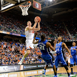 The Duke Flop by Tyrell Heaton - Sports & Fitness Basketball ( ncaa, duke, virginia, acc,  )