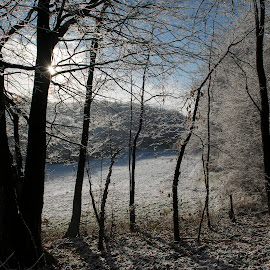 First snow by Dubravka Krickic - Landscapes Forests ( blue sky, snow, white, trees, sunshine, forest, sun,  )