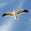 Seagull RCS *BETA* icon