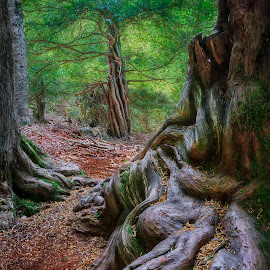 WALKING YEW by Juan PIXELECTA - Nature Up Close Trees & Bushes ( árboles, bosque, nature, tosande, árbol, trees, forest, naturaleza, grove )
