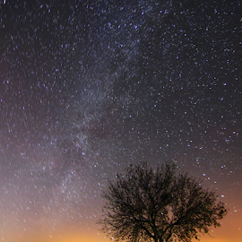 The Tree under the Milky Way. by Francisco García Ríos - Landscapes Starscapes ( field, lights, sky, tree, night photography, backlight, stars, recesvintus, night, long exposure, stones, milky way )