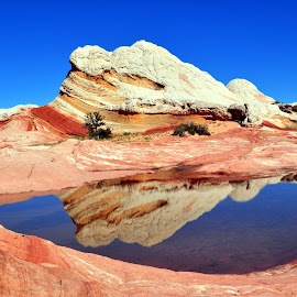 White Pockets reflection by Terry Niec - Landscapes Caves & Formations ( water, reflection, desert, butte, white pockets, formation, vermilion cliffs,  )
