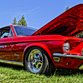 Red Pony by Brian Stout - Transportation Automobiles ( car, mustang, pony, automobile, show, car show, ford, antique, classic )