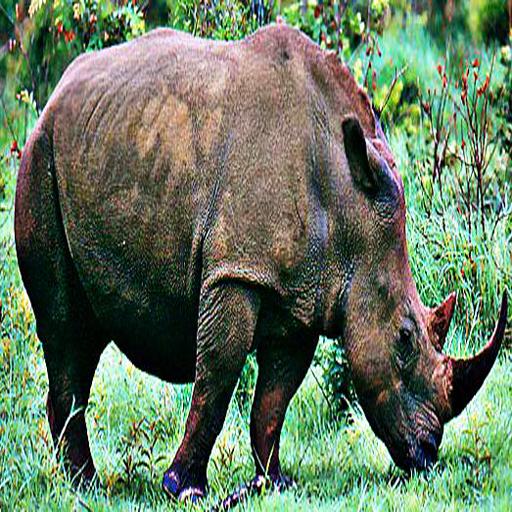 犀牛音效 LOGO-APP點子