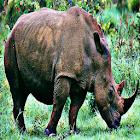 Rhino Sound Effects icon