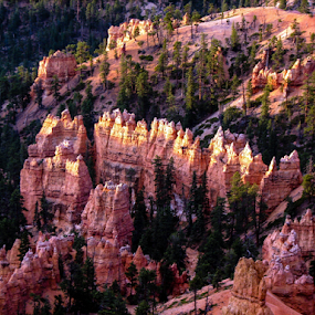 Bryce Canyon, UT by Vonelle Swanson - Landscapes Mountains & Hills ( national park, utah, trees, hoodoos, landscape, rocks, bryce canyon )