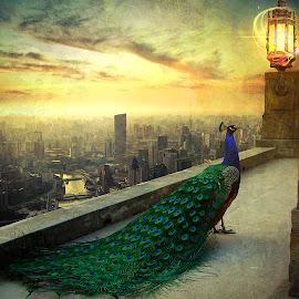 The Peacock by Nikos Apelaths - Digital Art Animals ( clouds, fantasy, sky, sunset, lamp, sunrise, peacock, city )