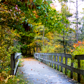 Kensington Way by Cristy McAuley - Landscapes Forests ( walking path, color, autumn, forest, bridge, fall, colorful, nature,  )