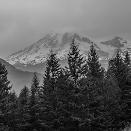 Misty Mountain by Andrea Gaines - Landscapes Mountains & Hills ( snowcap, mountain, black and white, fog, forest )