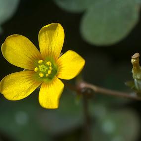 by Al Duke - Flowers Flowers in the Wild (  )