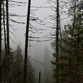 Foggy in the montains. by Denton Thaves - Landscapes Forests ( foggy )
