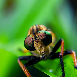 Boo Again by Rizki Irfansyah - Instagram & Mobile Android ( rainbow eyes, beautiful eyes, eyes, robberfly )
