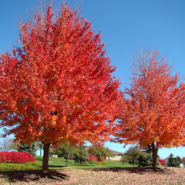 The End Of Fall 6 by Yvonne Collins - Nature Up Close Trees & Bushes (  )