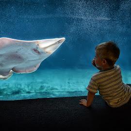 Aquarium, Genova by Cristian Peša - Babies & Children Children Candids