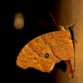 Resting. by Souvik Kundu - Animals Other ( abstract, butterfly, animals, morning, room,  )