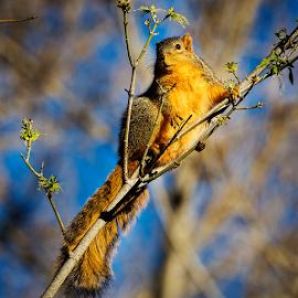 Squirrel 5259 by Ken Wade - Animals Other Mammals ( squirrel )