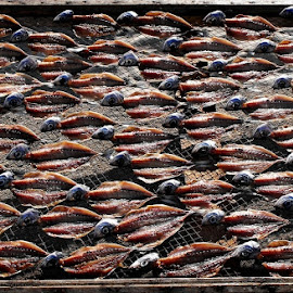 A tradição que alimenta by Ana Batista Constantino - Food & Drink Meats & Cheeses ( natureza, lugares, tradições, objects )