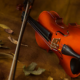 Wooden Beauty by Rakesh Syal - Artistic Objects Musical Instruments (  )