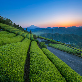 Lost in Farm Tea by Bertoni Siswanto - Landscapes Mountains & Hills ( fuji mountai, mountain & hills, sunrise & sunset, bertoni siswanto, landscape, tea farm )
