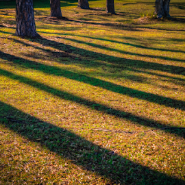 Morning Shadows by Petra Bensted - City,  Street & Park  City Parks ( park, sunshine, pine trees, morning, shadows )